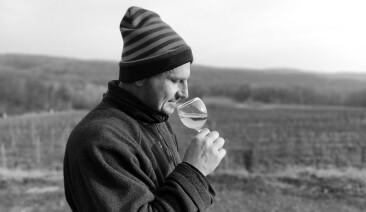 Істина у вині: як розвиває свою справу винороб із Закарпаття. І чому він не поспішає виходити у торгові мережі