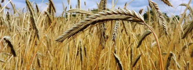 Експорт зерна з України на 20% відстає від торішнього