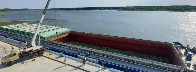 Через річку— наполиці «Сільпо»: 300 тонн херсонських кавунів прибули набаржі достоличних супермаркетів