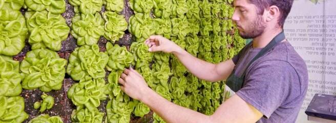 Усупермаркетах України з'являться вертикальні ферми для вирощування зелені