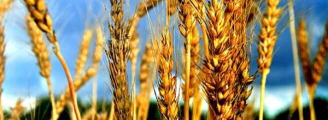 Порти скоротили перевалку зерна та олії більш ніж на чверть