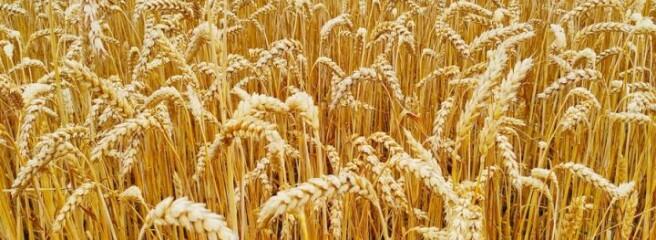 Експорт українського зерна відстає від торішнього на 12 млн т