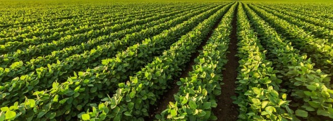 НБУ: Низкий прошлогодний урожай ускорит инфляцию впервой половине 2021г.