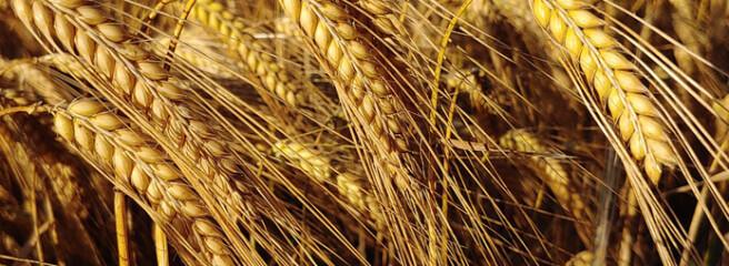 Україна з початку 2020/2021 МР експортувала 39,24 млн т зернових