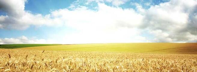 Україна з початку 2020/2021 МР експортувала 37,71 млн т зернових
