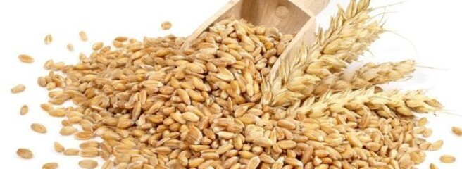 Одеська область намолотила перший мільйон тонн зерна