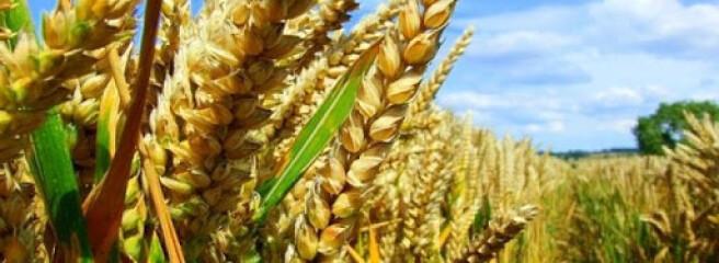 Урожай-2021: ще одна область України пройшла мільйонний рубіж